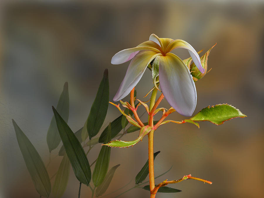 Flowers Photograph - 4067 by Peter Holme III