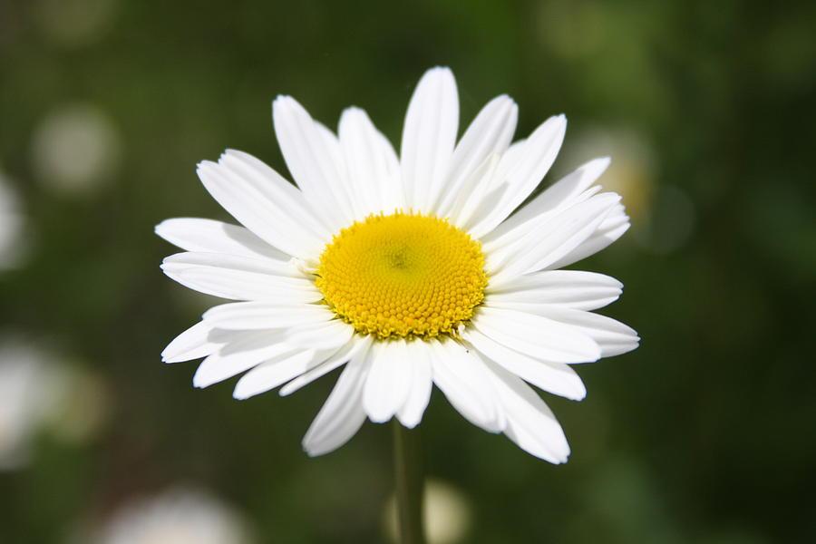 Flowers Photograph - Flowers by Luke Robertson