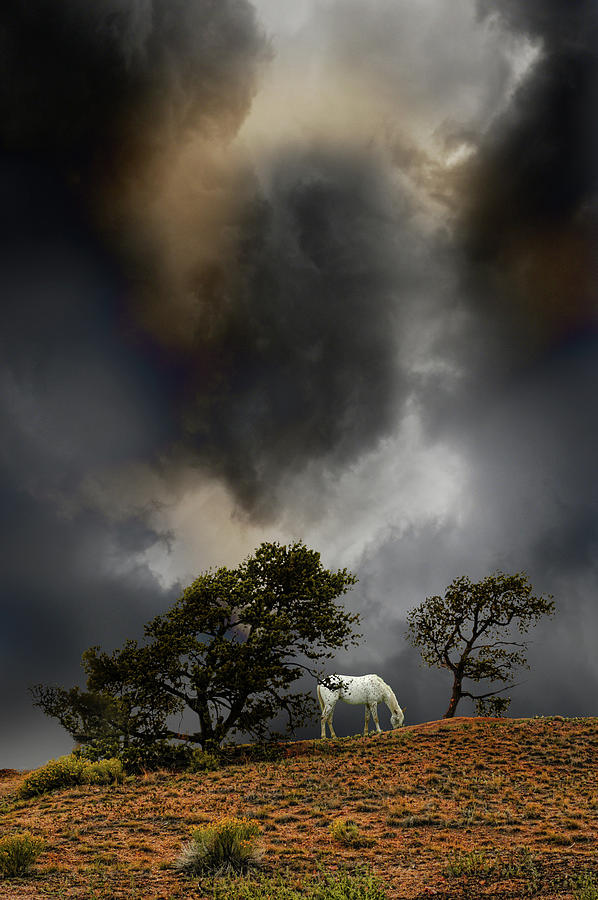 Horse Photograph - 4263 by Peter Holme III