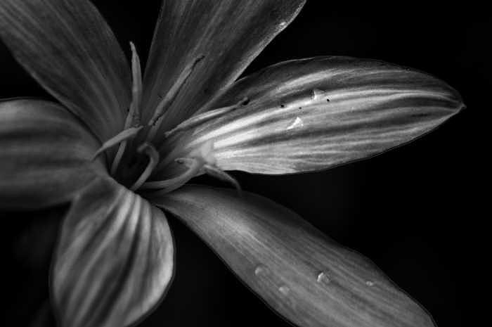 Flower Photograph - A Little Morning Dew by Robert Hill