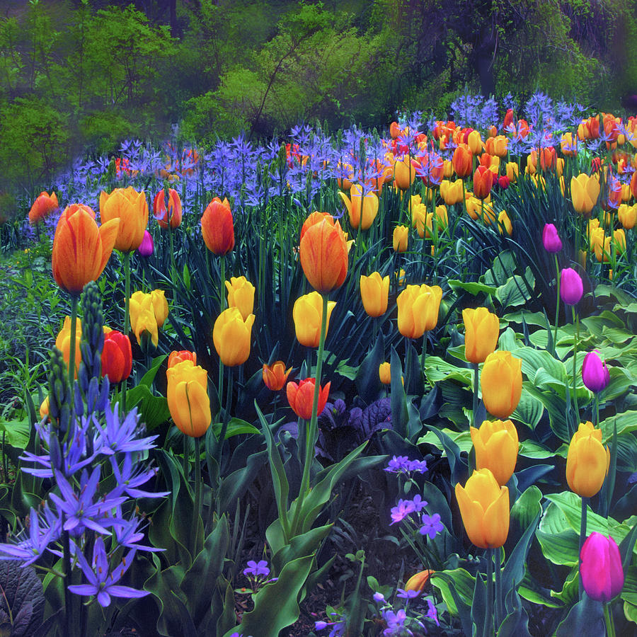 Tulips Photograph - Procession Of Tulips by Jessica Jenney