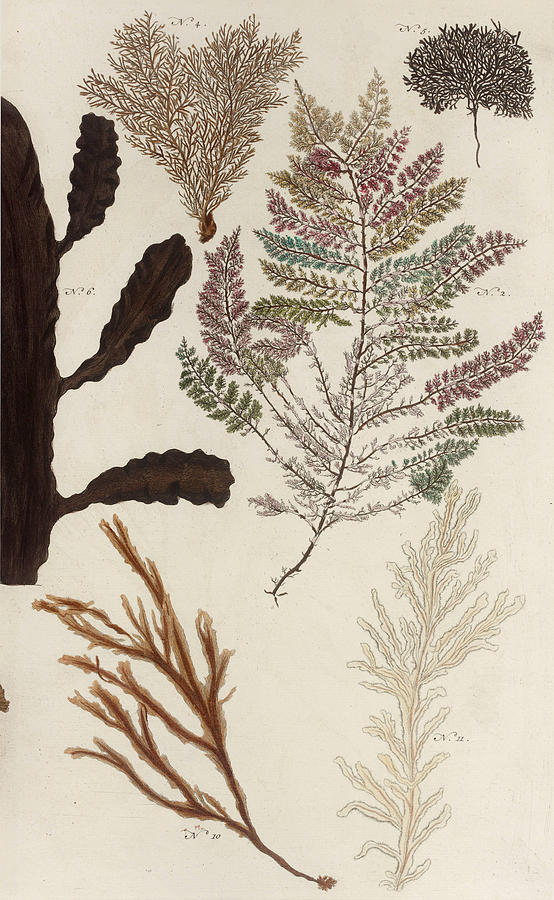 Aquatic Animals - Seafood - Algae - Seaplants - Coral Drawing by Art Makes Happy