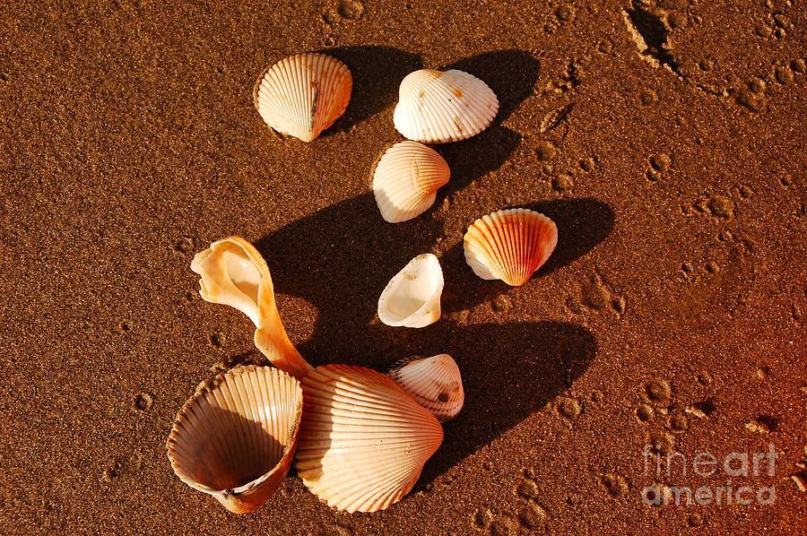 Beach Photograph - Beach Shells by Scott Diffee