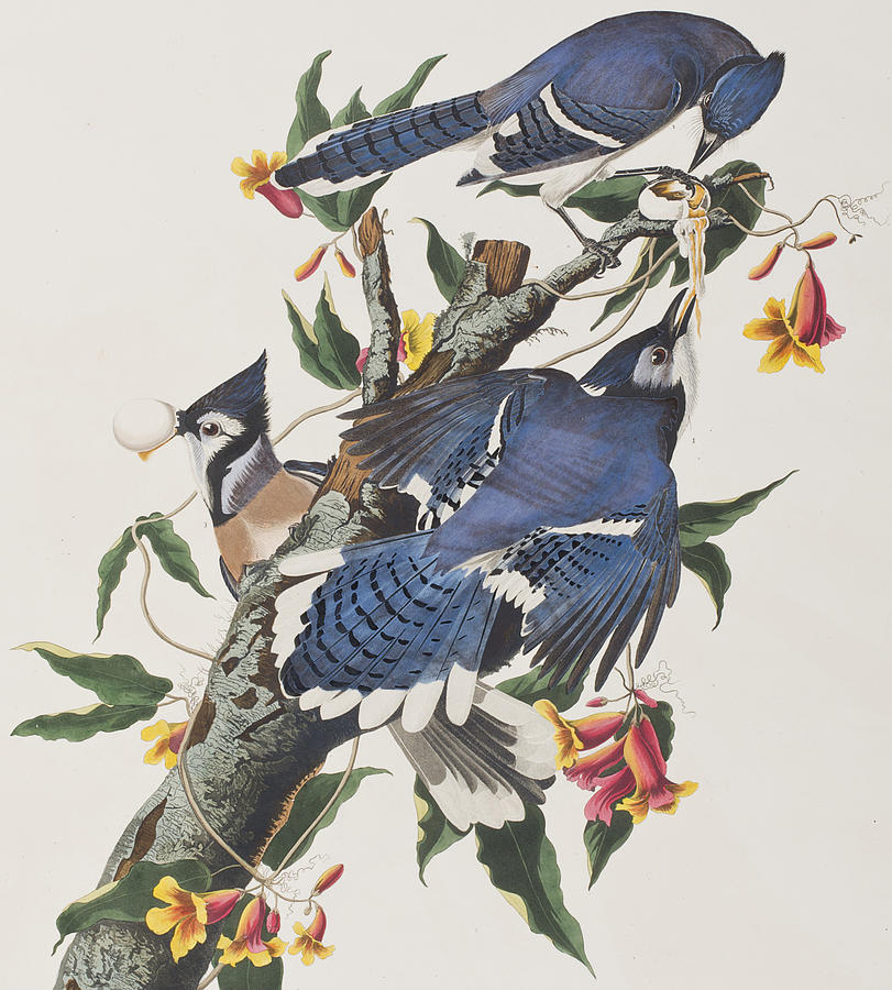 Image result for james audubon