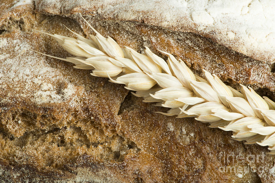 Agriculture Photograph - Close Up Bread And Wheat Cereal Crops by Deyan Georgiev