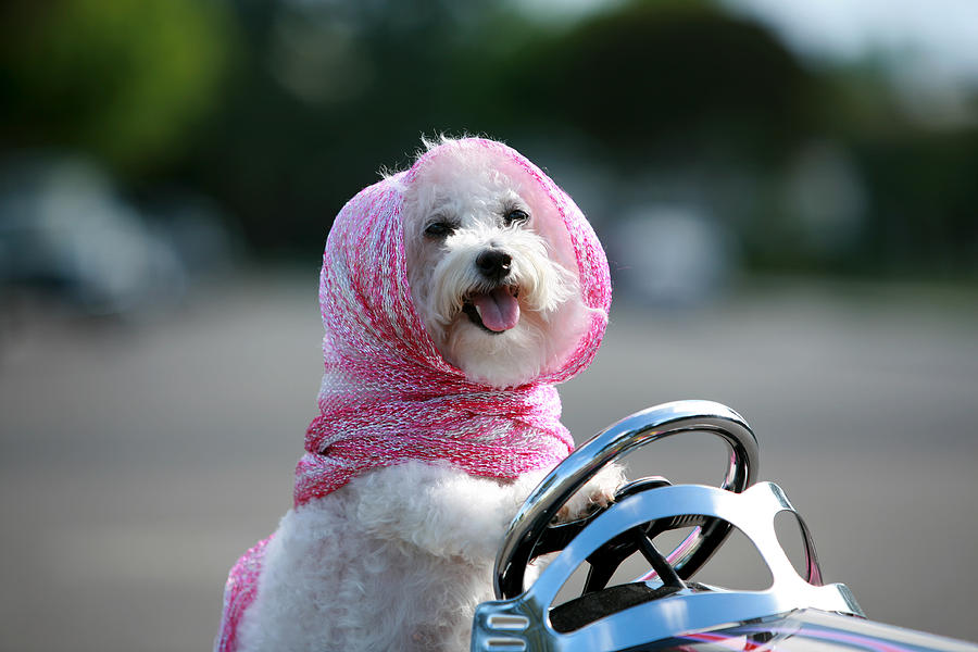 Alternative Energy Photograph - Fifi Goes For A Ride by Michael Ledray