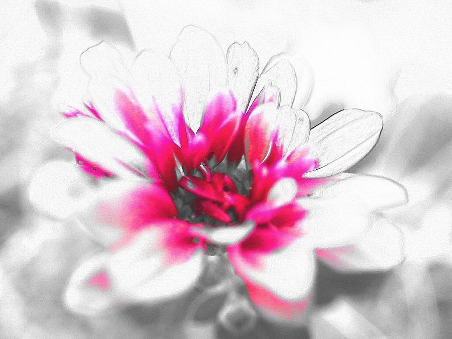 Flower Photograph by Kumiko Izumi