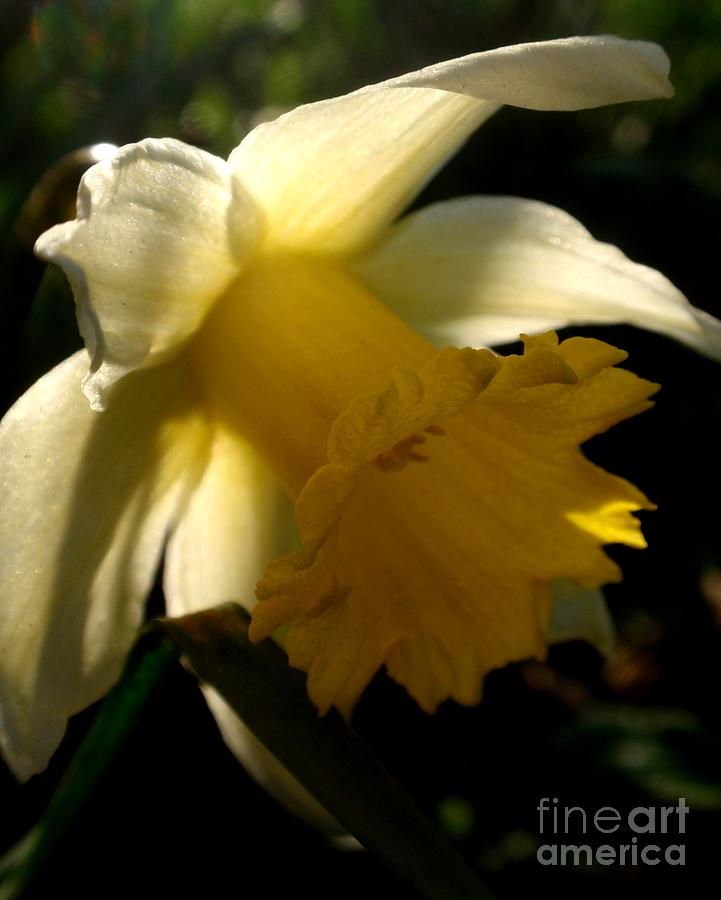 Nature Photograph - Scent Of Spring by Valia Bradshaw