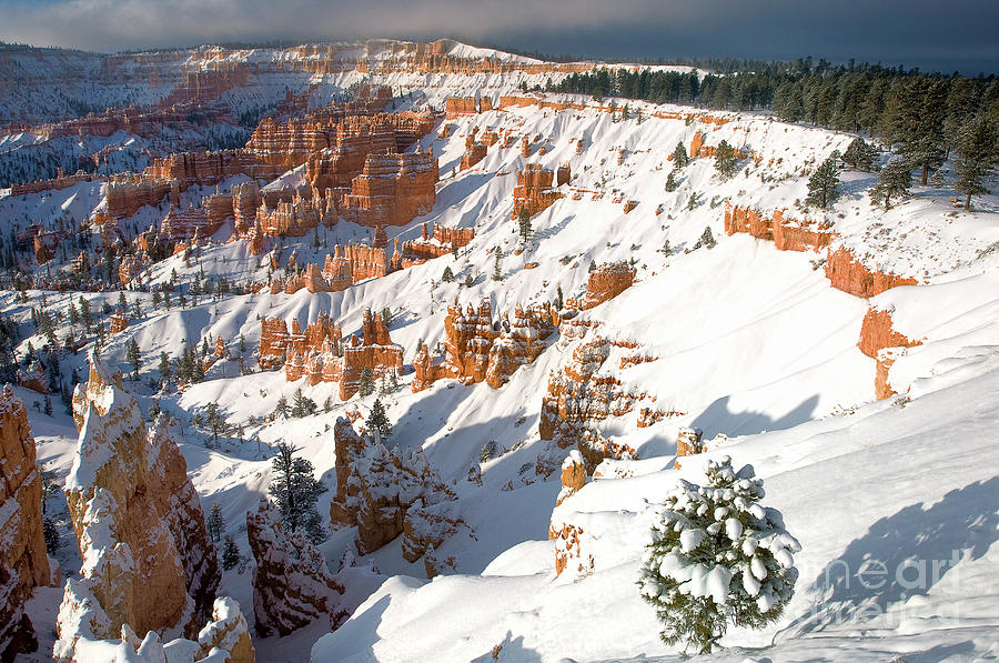 winter sunrise bryce canyon national park utah by Dave Welling