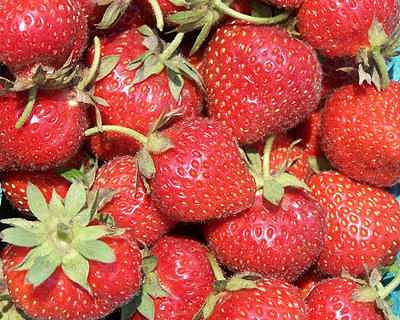 Berries Photograph - Strawberries by Suzette Eichenberg