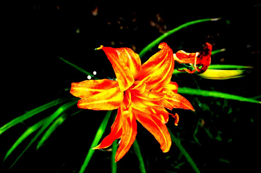Flowers Photograph - Love Flowers by Baljit Chadha