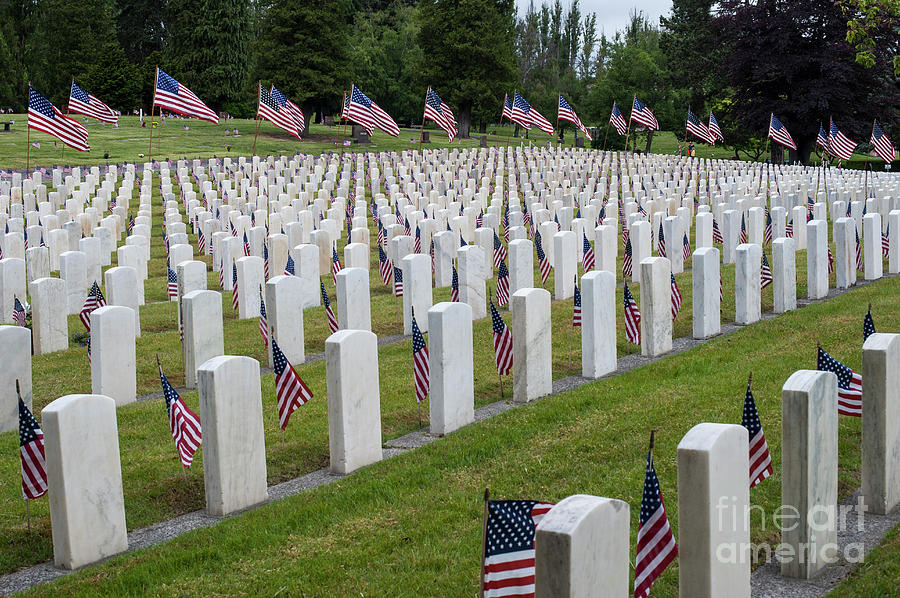 American Flags At Cemetery Photograph