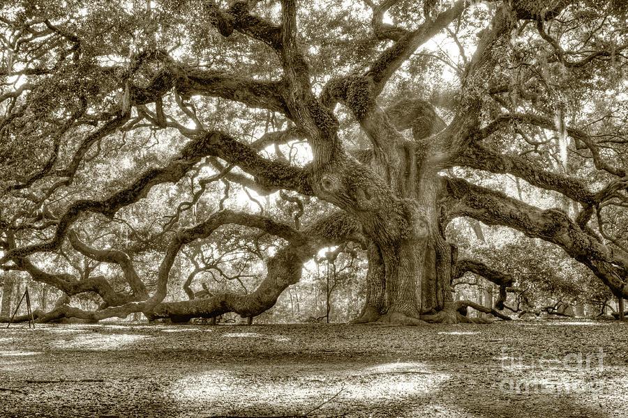 Live Oak Photograph - Angel Oak Live Oak Tree by Dustin K Ryan