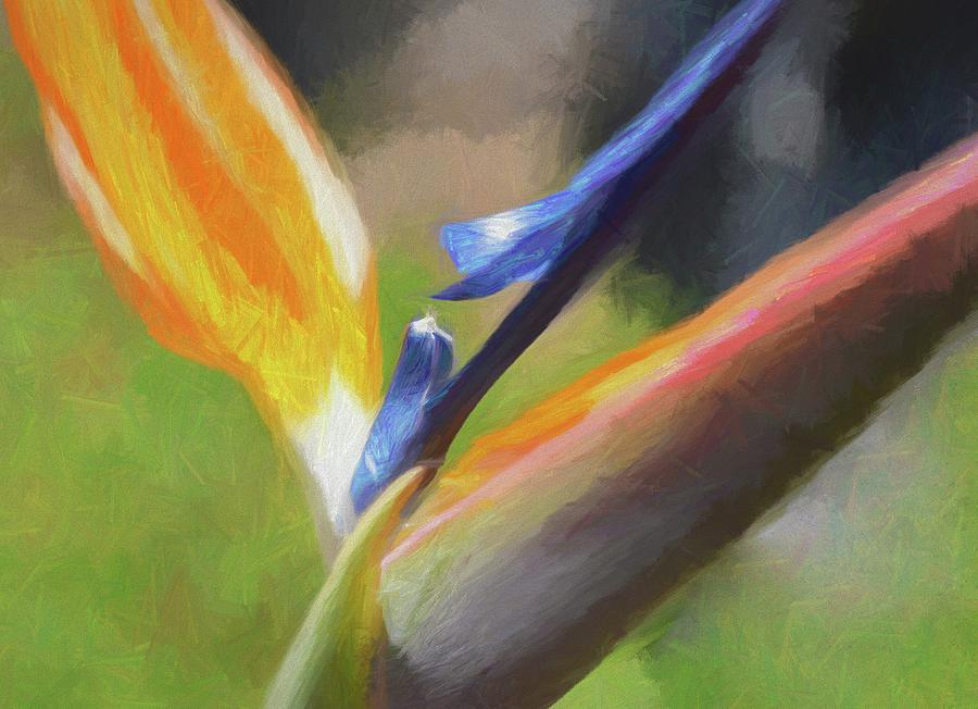 6 Bird Of Paradise Impression Finish Digital Art