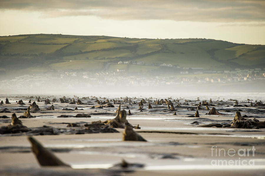 Ancient Photograph - Bronze Age Sunken Forest At Borth On The West Wales Coast Uk by Keith Morris
