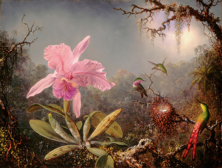 Cattleya Orchid Painting - Cattleya Orchid And Three Hummingbirds 6 by Martin Johnson Heade