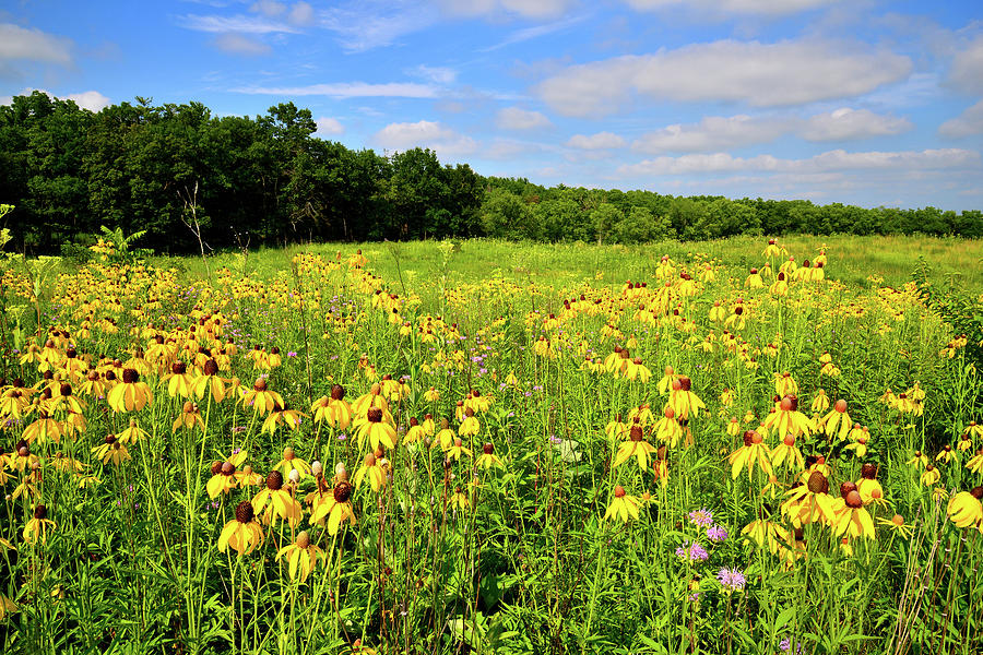 Mchenry County Photograph - Marengo Ridge Wildflowers by Ray Mathis