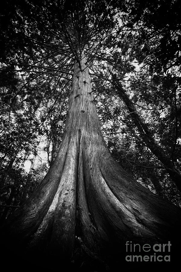 Amazing Photograph - Old Tree by Ulisse Bart