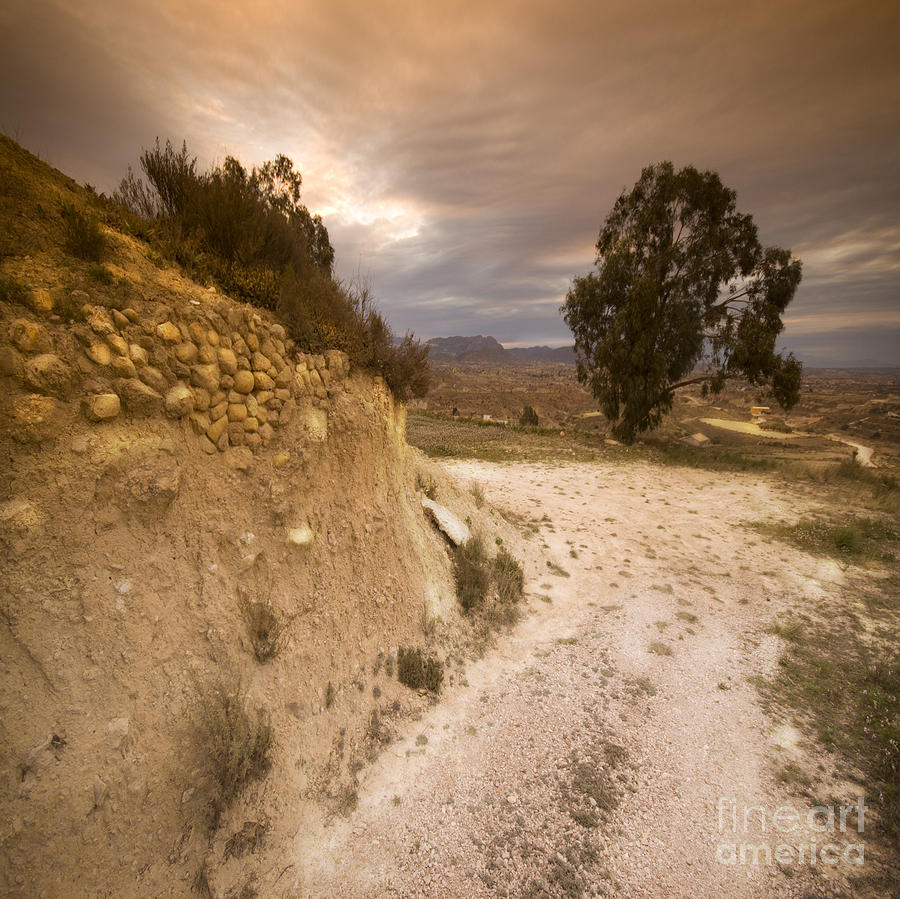 Orchard Photograph - Spanish Landscape by Angel  Tarantella