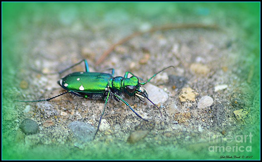 Green Photograph - 6-spotted Green Tiger Beetle by Deb Badt-Covell