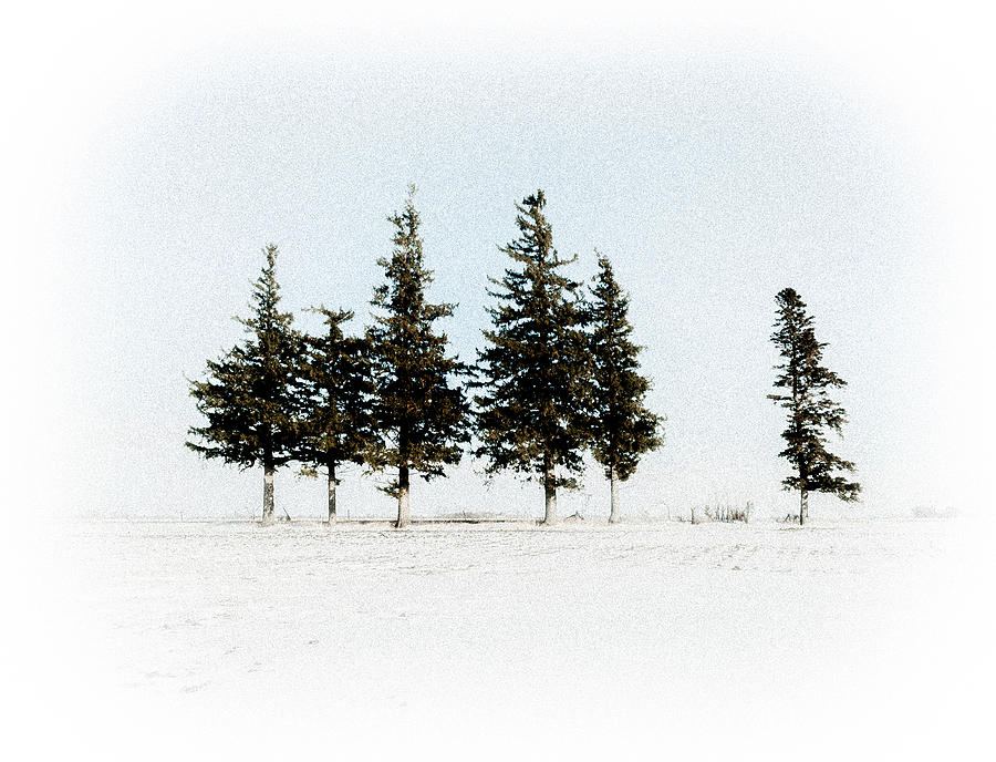 6 trees by Troy Stapek