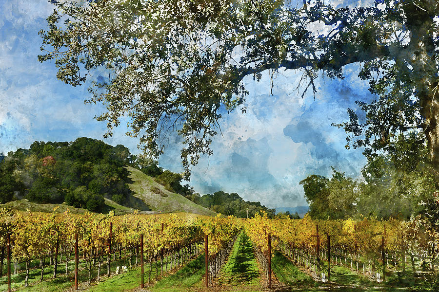 Vineyard in Napa Valley California by Brandon Bourdages