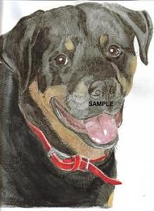 Rottweiler Painting by Billie Riholm
