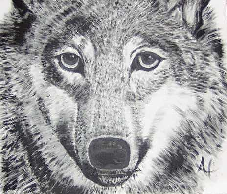 Wolf Painting - Lobo1 by Al Borrego