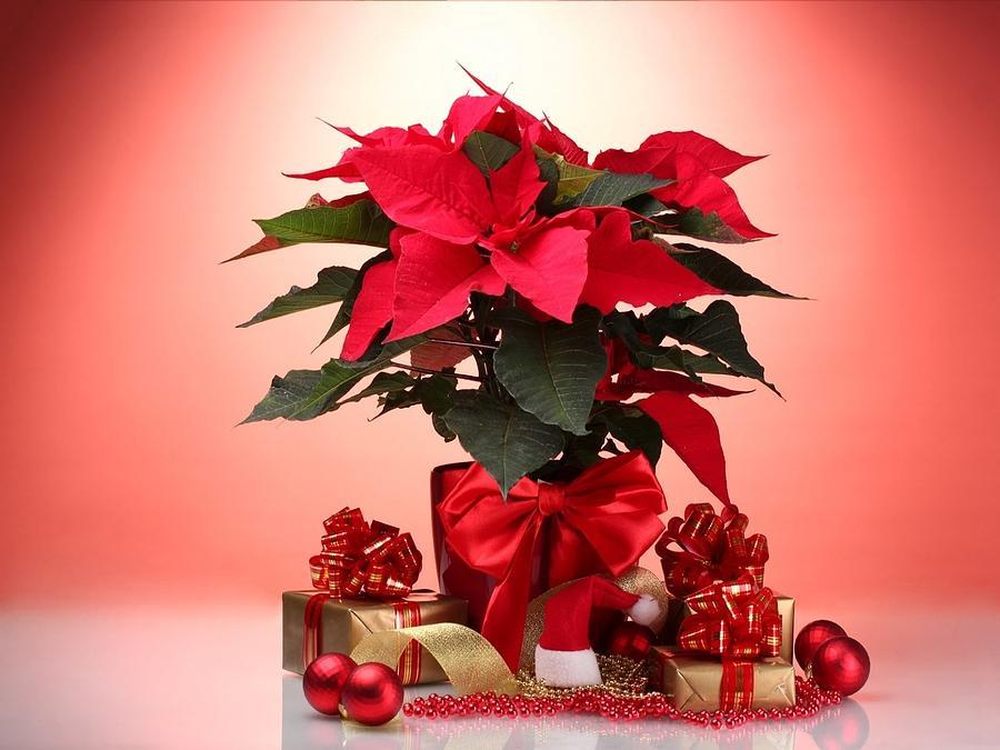 Christmas Digital Art - Christmas by Dorothy Binder