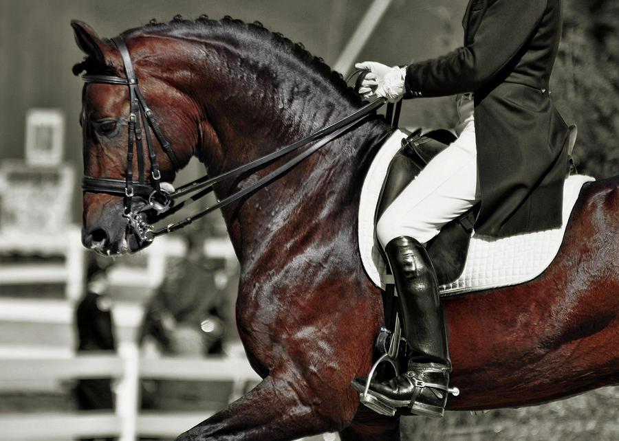 Horse Photograph - Dressage Best  by JAMART Photography