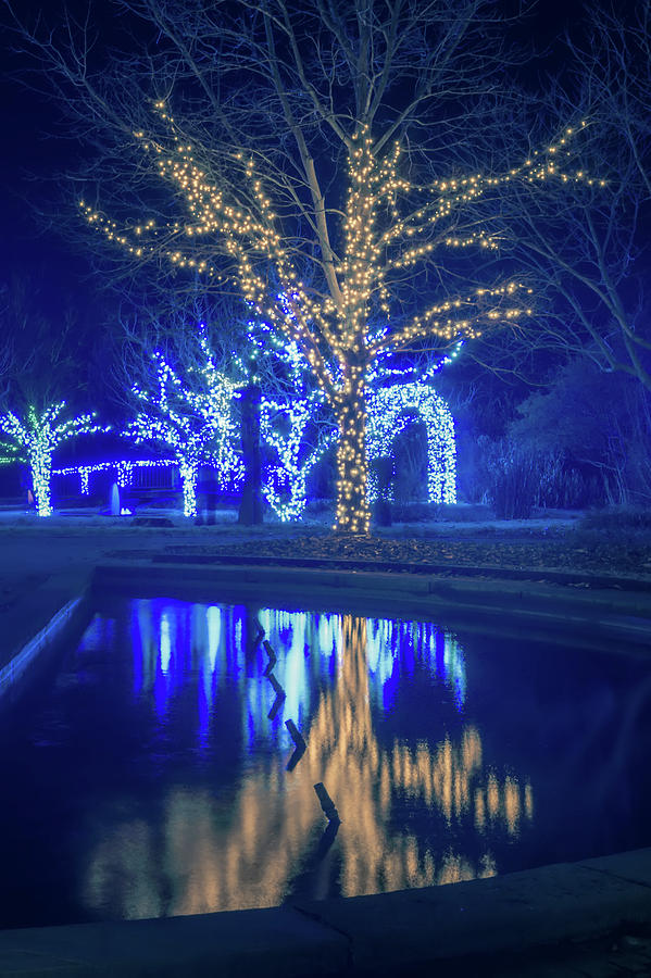 Lights Photograph - Lights, Christmas, Light, Christmas Tree, Green, Color, Red, Blu by Alex Grichenko