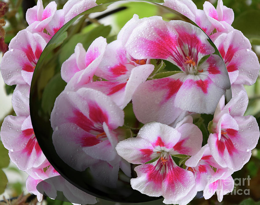 Nice Flower Photograph By Elvira Ladocki
