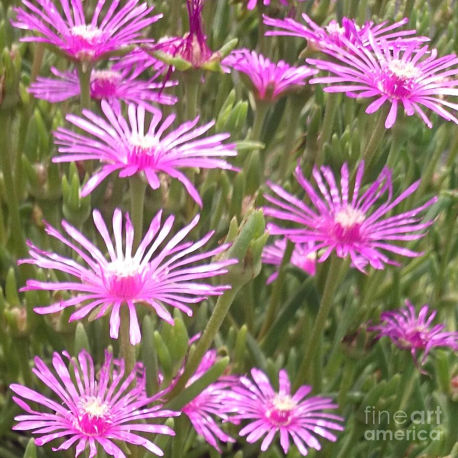 Pink Photograph - Pink Flowers   by Sobajan Tellfortunes