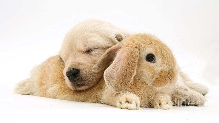 Rabbit And Puppy Photograph by Jane Burton