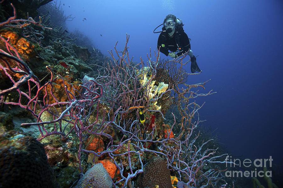 Bonaire Photograph - Scuba Diver Swims Underwater Amongst by Terry Moore