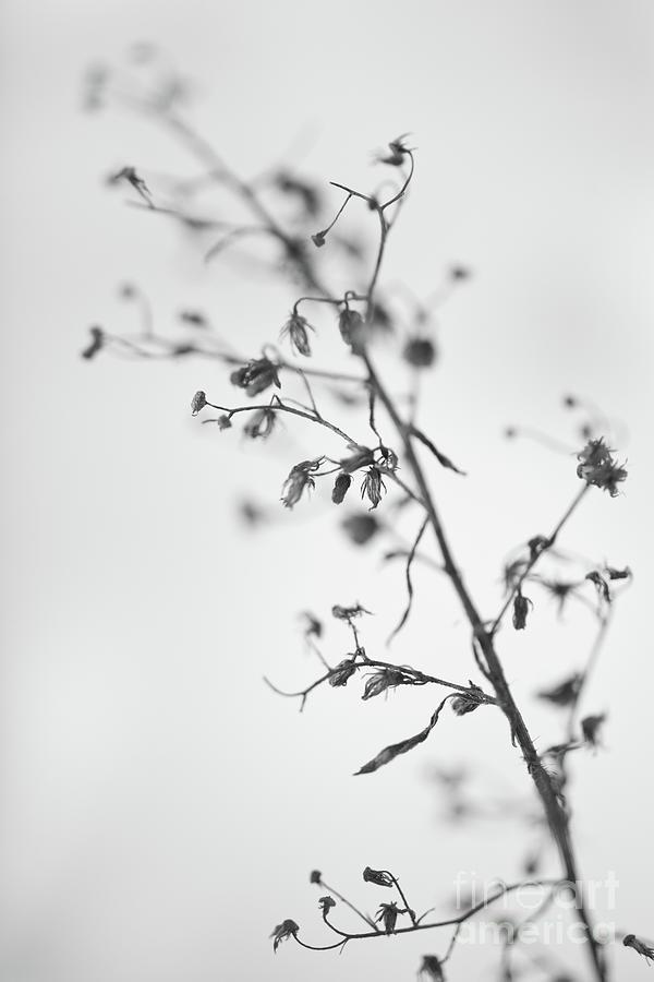 Dry Photograph - Untitled by Gabriela Insuratelu
