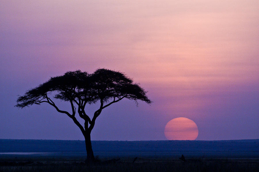 Africa Photograph - African Sunrise by Michele Burgess
