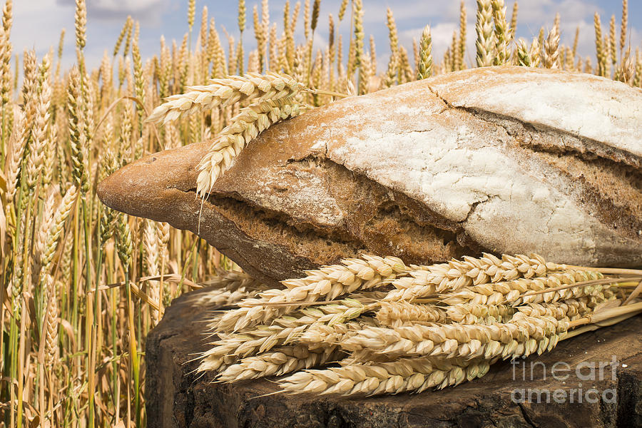 Agriculture Photograph - Bread And Wheat Cereal Crops. by Deyan Georgiev