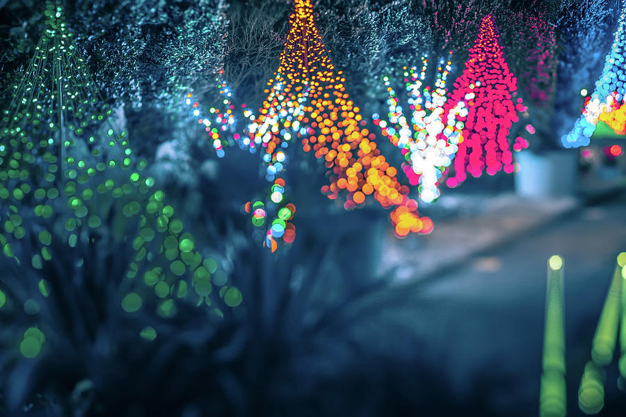 Decorations Photograph - Christmas Season Decorationsafter Sunset At The Gardens by Alex Grichenko