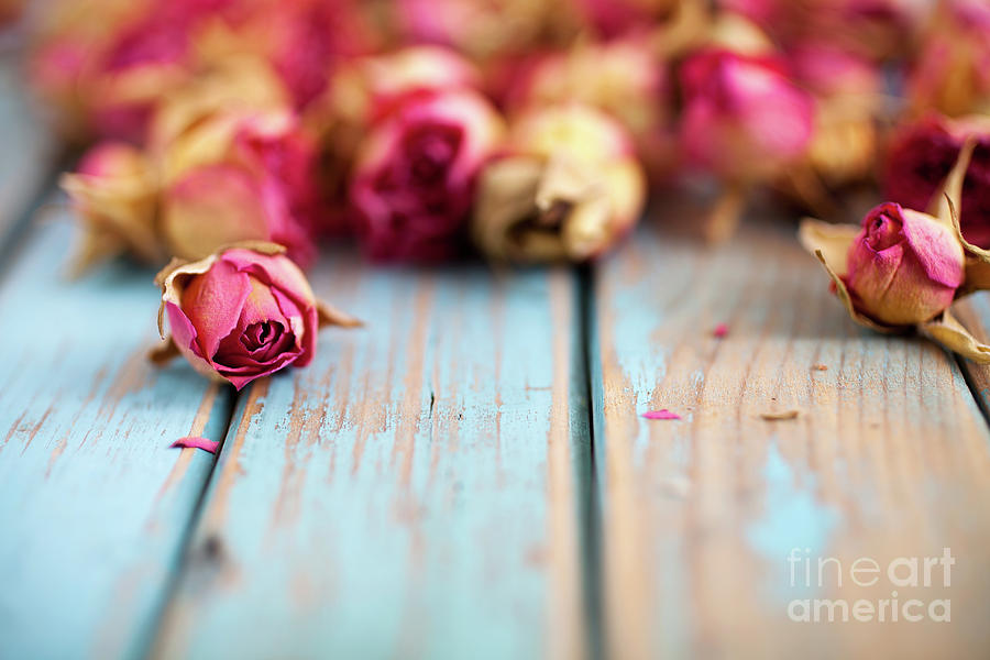 Day Photograph - Dried Roses by Kati Finell