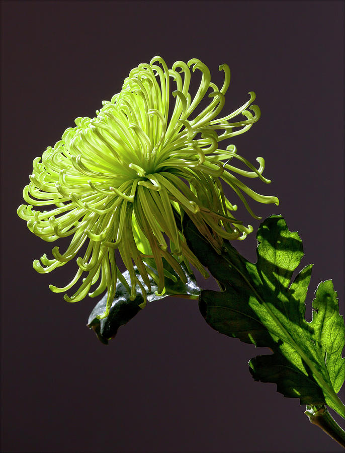 Floral Still Life Photograph - Floral Still Life by Robert Ullmann