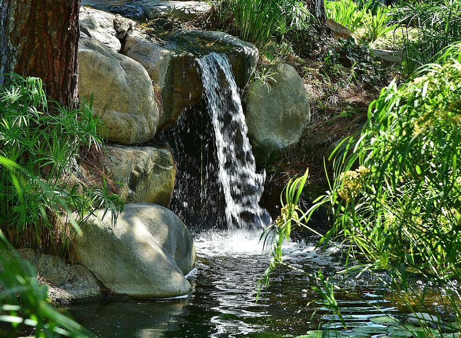 8 Lily Pond Waterfall Photograph