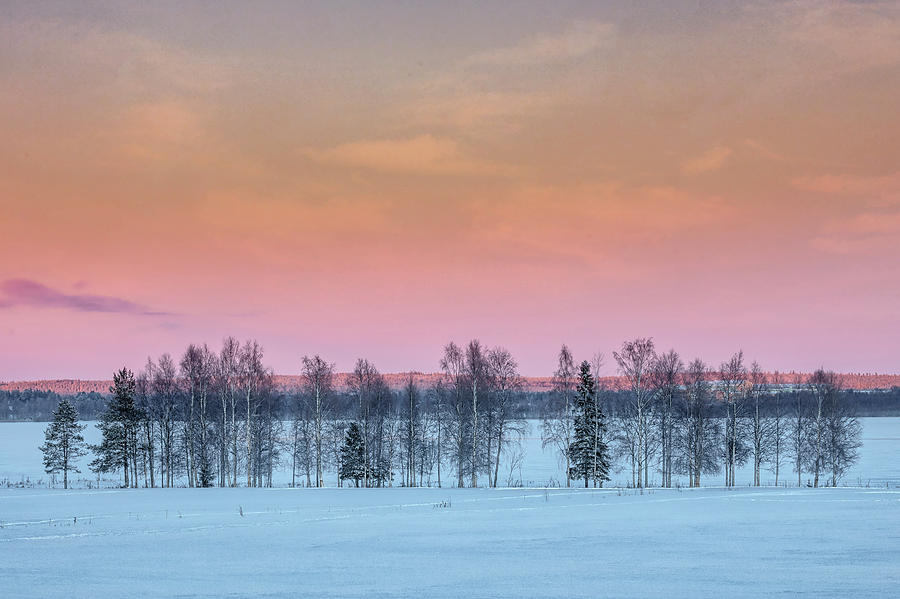 Lulea Photograph - Swedish Lapland by Joana Kruse