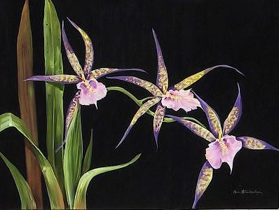 Painting Painting - Spider Orchids by Stan  Sternbach