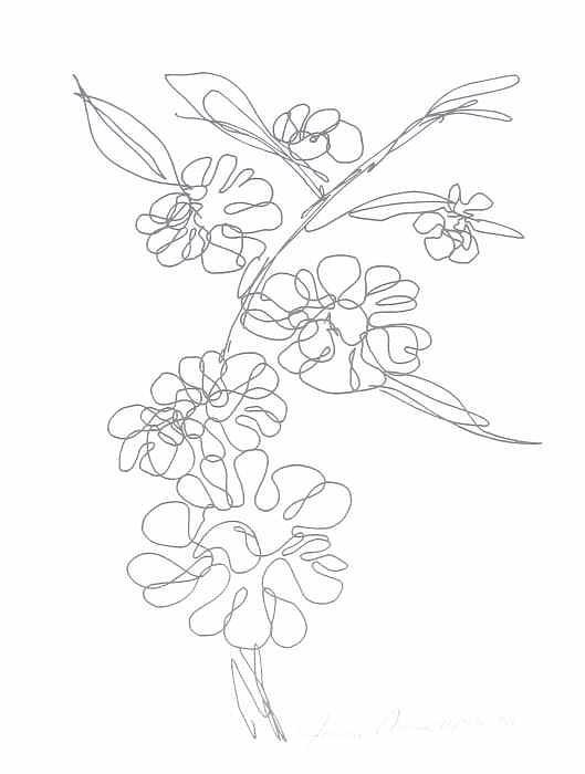 Hawaiian Flower Drawing By Joanie Arvin