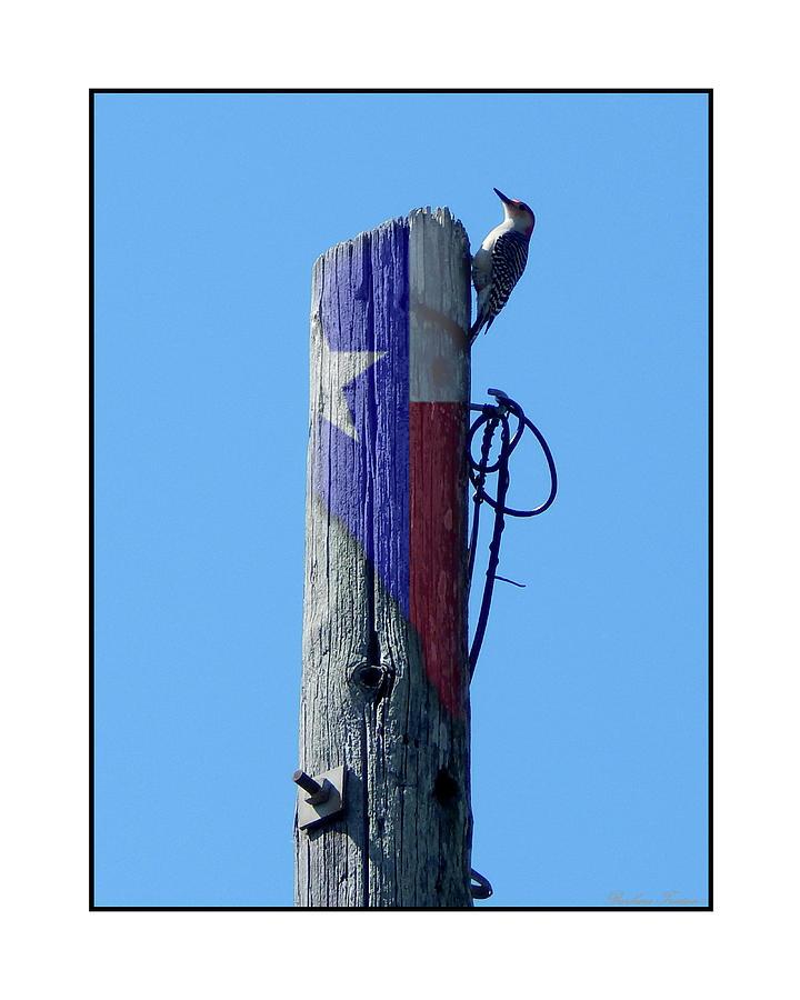 Creative Energy Photograph - #8667 Woodpecker by Barbara Tristan