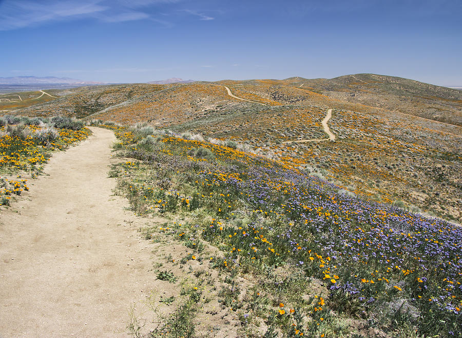 Antelope Valley Poppy Reserve by Beth Taylor