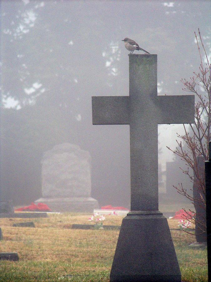 Fog Photograph - 9000-foggy Morning by Martha Abell