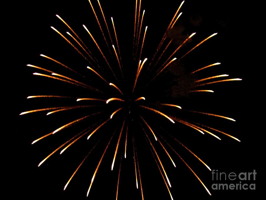 Contemporary Photograph - A 4th Of July Flower by Robert Wolverton Jr