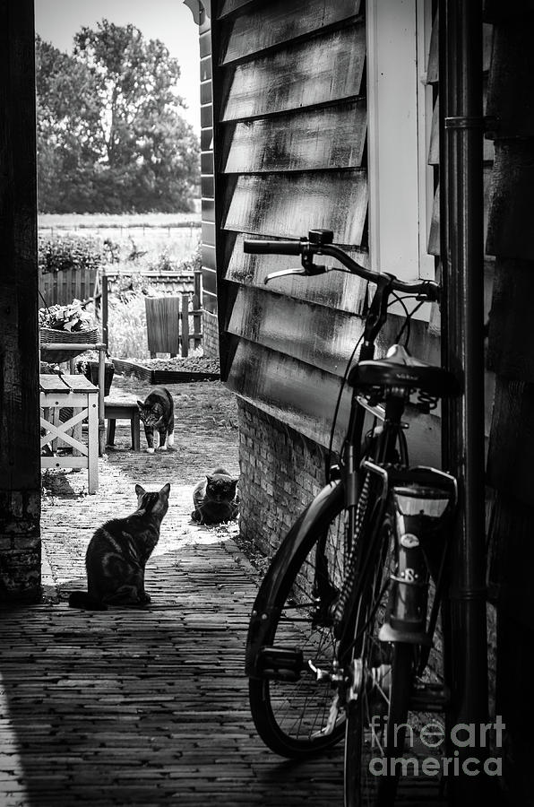 Europe Photograph - A Backstreet With Cats And Bicycle In Marken B/W by RicardMN Photography